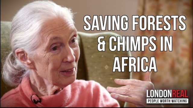 SAVING FORESTS & CHIMPS BY HELPING LOCALS – Dr. Jane Goodall on London Real